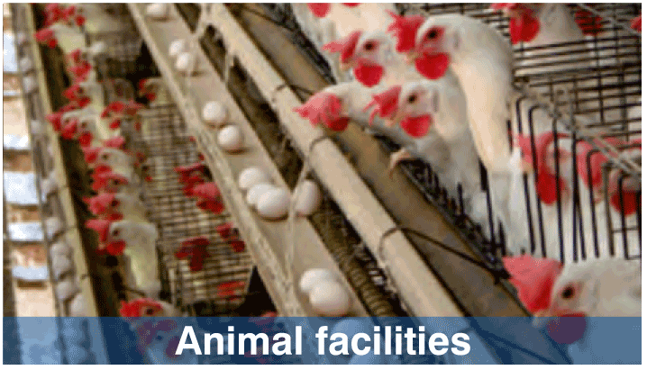 Animal Facilities